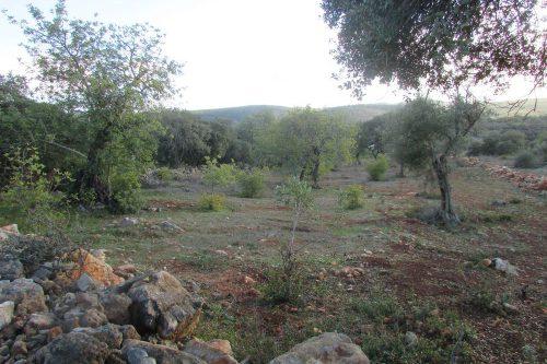 Terreno com Projeto Aprovado Para Venda – Tôr (Loulé)