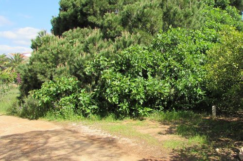 Rustic Land For Sale – Quarteira
